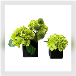 PLG Black Glass Vase With Dianthus & Hydrangea, Duo Set