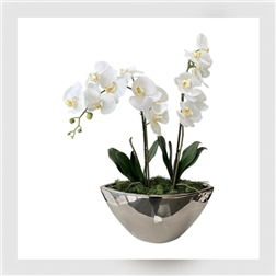 PLG Stunning Large Orchid in Oval Silver Vase